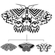 moth-header