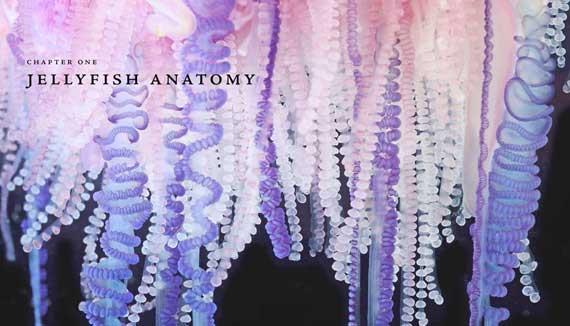 Jellyfish_1_570