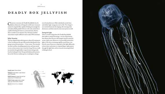 Jellyfish_7_570