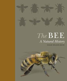 Bee_270_web