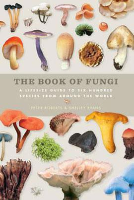 Fungi_270_web